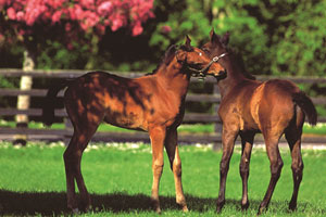 Irish National Stud - Co. Kildare