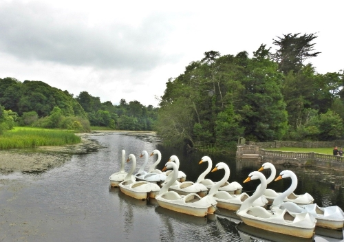 Swan boats, Westport House